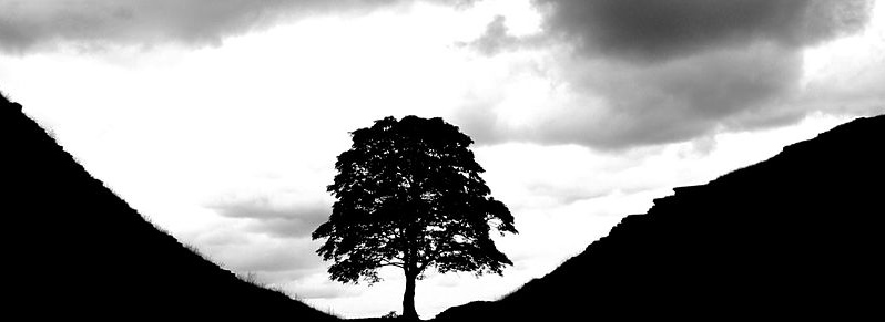 Tree in black.jpg