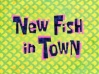 New fish in town.jpg