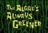 Titlecard The Algae's Always Greener.jpg